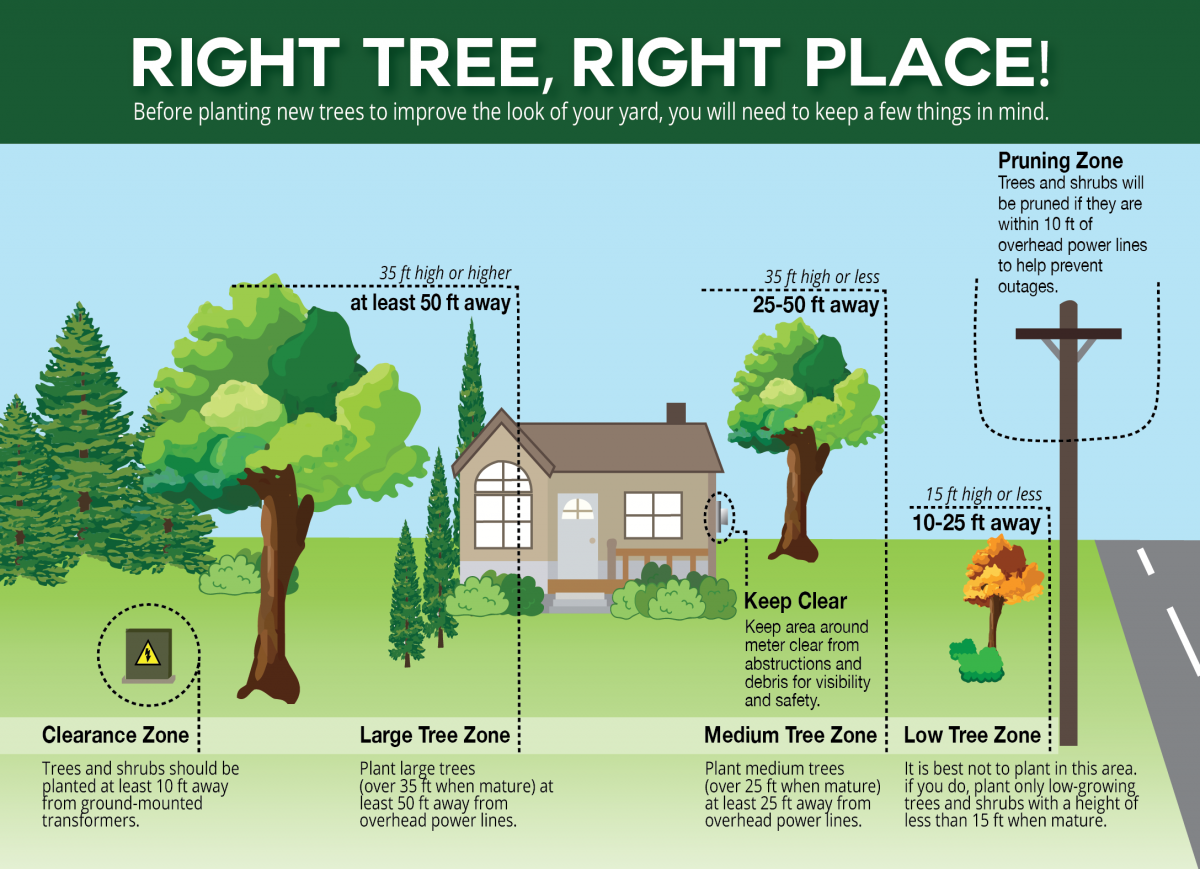 Right-Tree-Right-Place-02.png