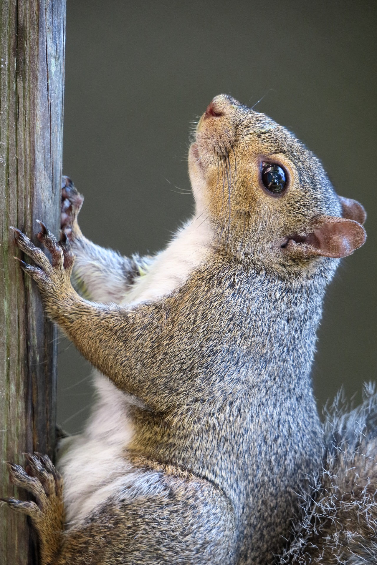 squirrel-1.jpg